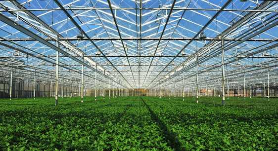 用智能氨气检测仪有效预防温室大棚蔬菜氨气中毒问题