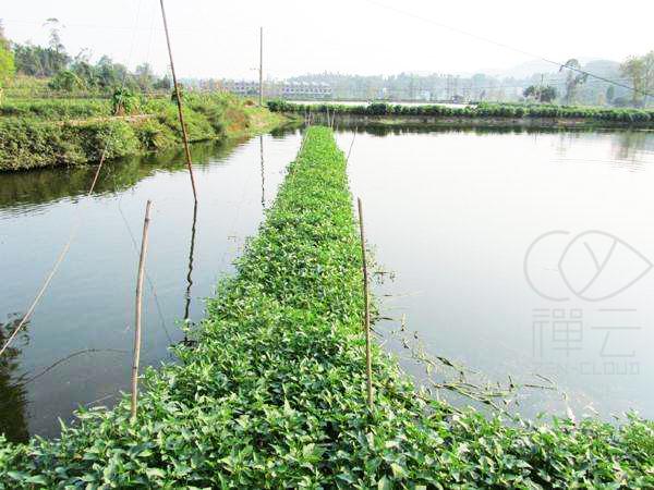 虾养殖面积超2000万亩,8成以上养户却溃不成军!你还敢养吗?
