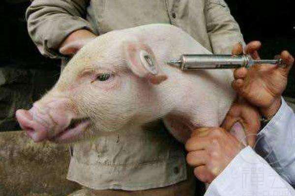 国务院确定五大措施鼓励养猪,加速猪业复产