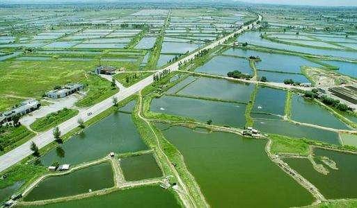 水产养殖将成为最赚钱的行业,未来鱼价会疯涨