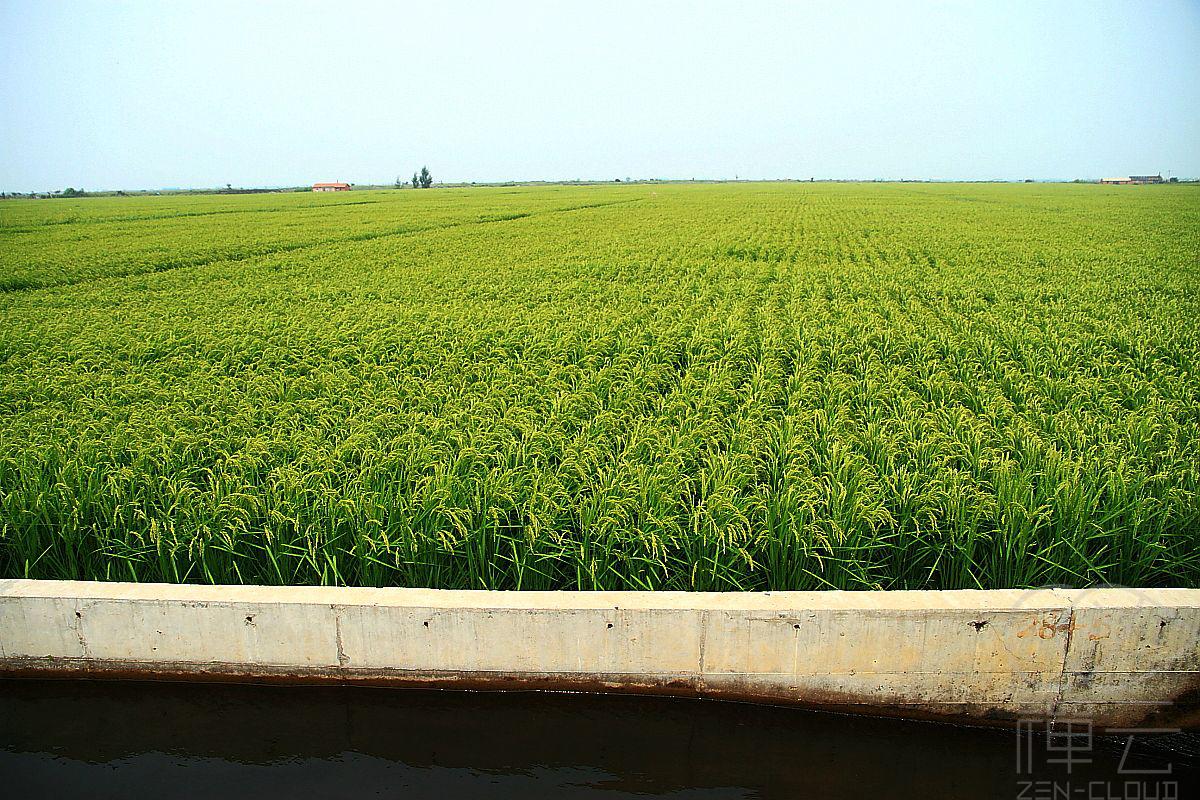 2020年种水稻赚钱吗?一亩地成本多少?包多少亩合适?