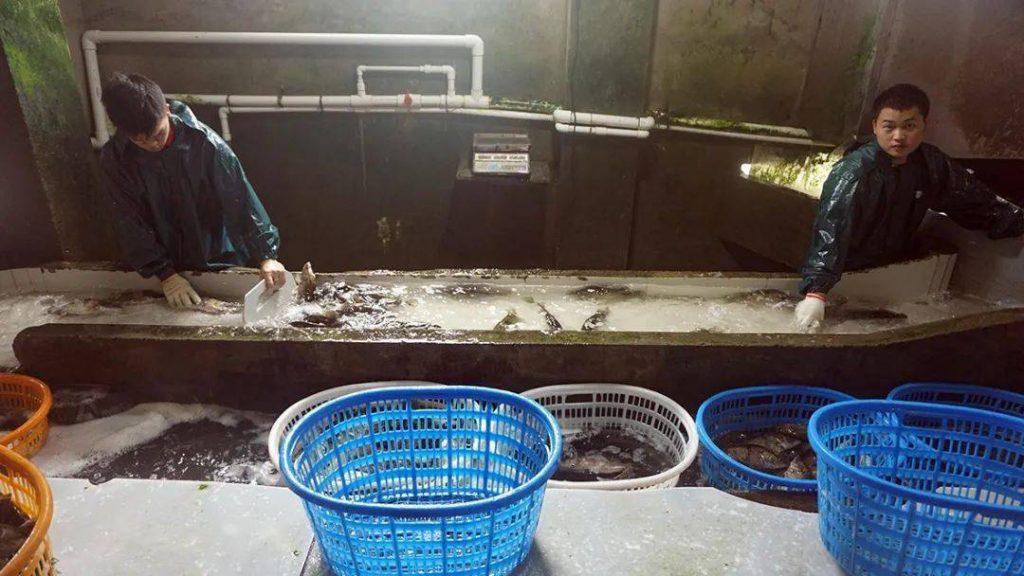 """(转)销售量达14710吨,上涨10.34%!九江这家水产企业""""疫""""中抢机迎增长!"""