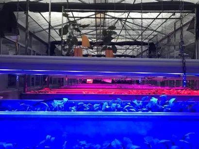 (转)马稚昱:现代设施农业植物光环境调控技术及应用